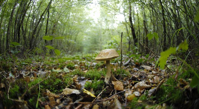 champignons biodiversité