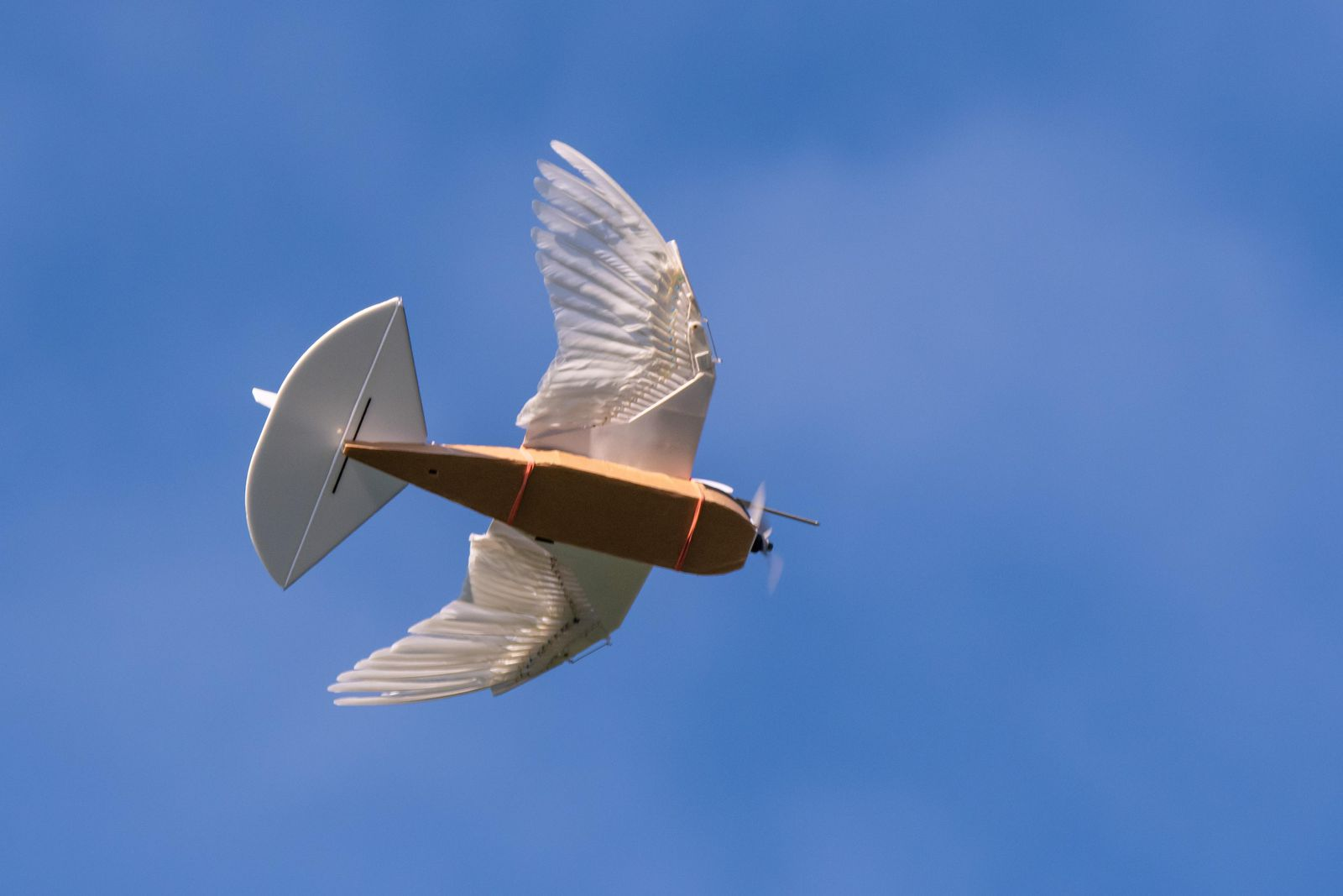 Pigeonbot